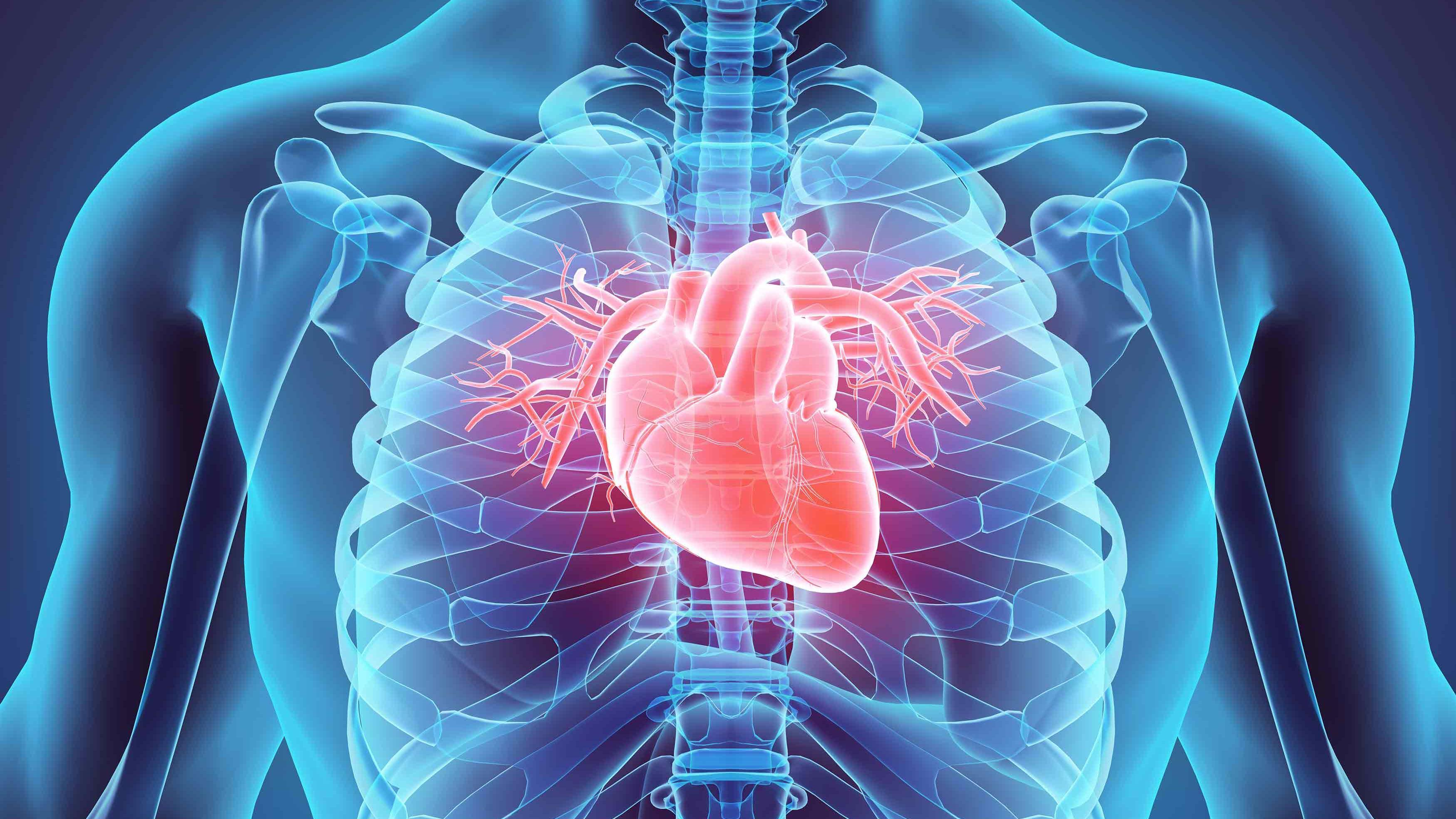 Szív és érrendszeri betegségek szűrése, gondozása